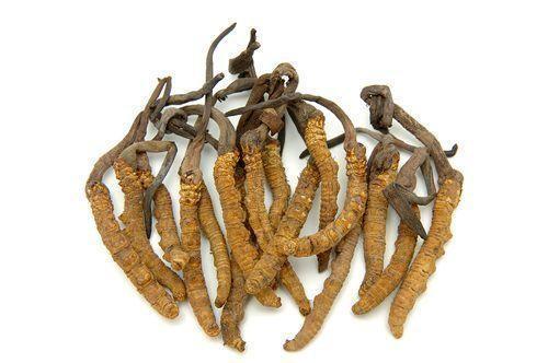 cordycepsmushrooms